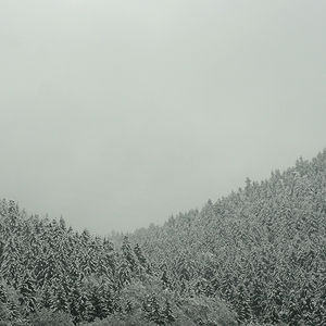 Flickr Photo Download: winterwald.