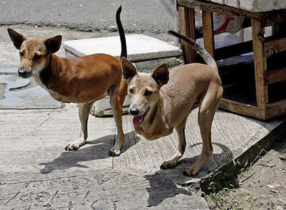 239754-inworld-firstpair-of-dog-kangaroos-have-been-found-in-the-phillipines.jpg 495×363 pixels