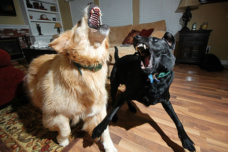 My Dogs Are BEAST! on Flickr - Photo Sharing!