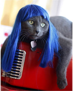 Kitty Wigs! Electric Blue