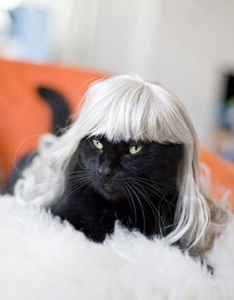 Kitty Wigs! Silver Fox