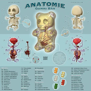 The Anatomy of a Lego Man, Gummy Bear… —  Illusion 360 - World's Most Amazing Art, Design, Technology, Video