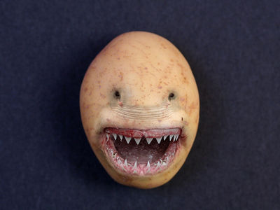 Flickr Photo Download: Potato Shark