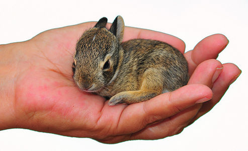 Baby Bunny on White on Flickr - Photo Sharing!