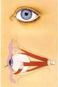 All sizes | 10 L'oeil - Les muscles moteurs de l'oeil, illus. Peter Wyss (Le Livre de Sante, v.8, 1967) | Flickr - Photo Sharing!