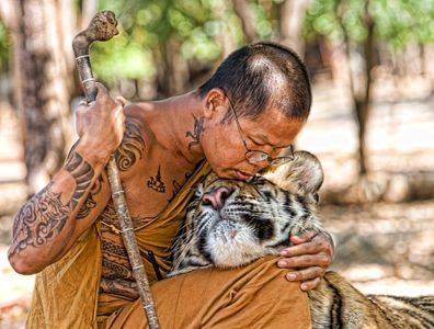 Buddhist monk and tiger. - Imgur