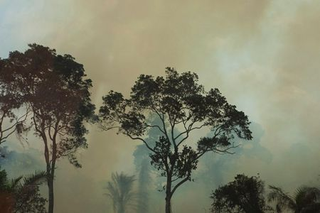 Photography   A forest burns in eastern Sierra Leone April 23, 2012. Finbarr OReilly Reuters