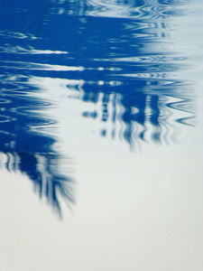 Palm tree ripples | Flickr - Photo Sharing!
