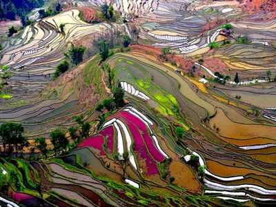 Terraced Rice Field Photo, China Wallpaper – National Geographic Photo of the Day