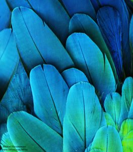 "500px   Photo ""Macaw Feathers"" by Michael Fitzsimmons"