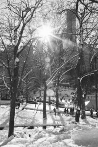 Beautiful Black and Photos of Central Park After the Blizzard - My Modern Metropolis