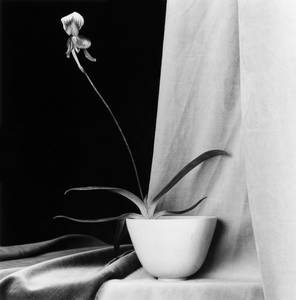 everyday_i_show: photos by Robert Mapplethorpe