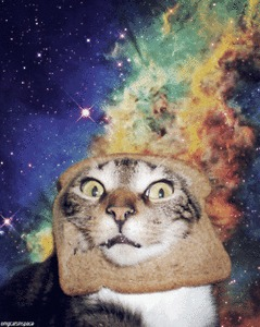 Cats in space. - Imgur