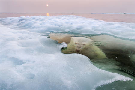 2013 National Geographic Photography Contest Winners - Photos - The Big Picture - Boston.com