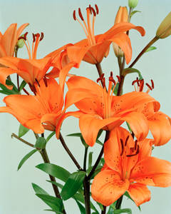 Orange Lilies / by Ann Woo