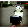 Flickr Photo Download: panda