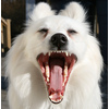Flickr Photo Download: My What Big Teeth You Have…..