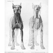 anatomy-1-dog.jpg 1239×1500 pixels