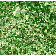 "Strangely ""Digital"" Agricultural Landscapes Seen From Space"