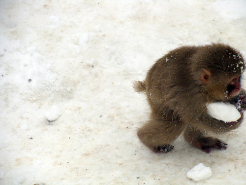 "CyBeRGaTa, hellocute: ""This snow, it is mine."" (via Cute…"