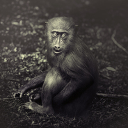 Monkeys ,story tellers on Photography Served