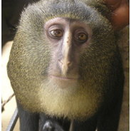 All sizes | new-monkey-1 | Flickr - Photo Sharing!