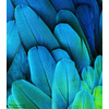 "500px / Photo ""Macaw Feathers"" by Michael Fitzsimmons"