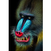 """Mandrill"" by Natalie Manuel 