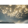Epic Mammatus  Flickr : partage de photos